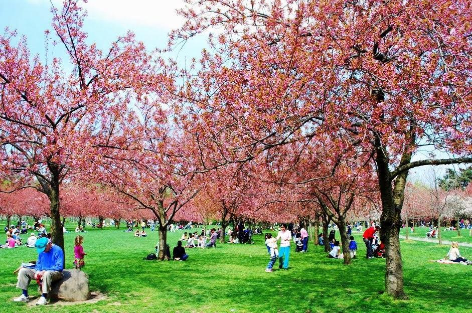 18 Coisas para Fazer em Nova York de Graça Jardim Botânico do Brooklyn